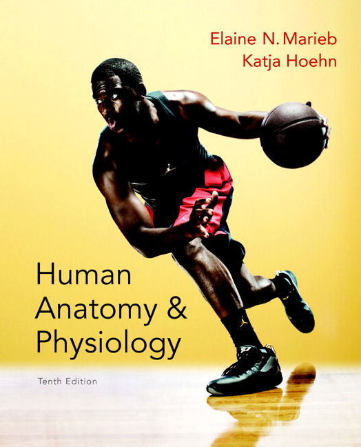 human anatomy and physiology lab manual 12th edition exercise 2
